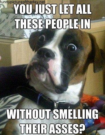 Porque los perros se huelen el trasero