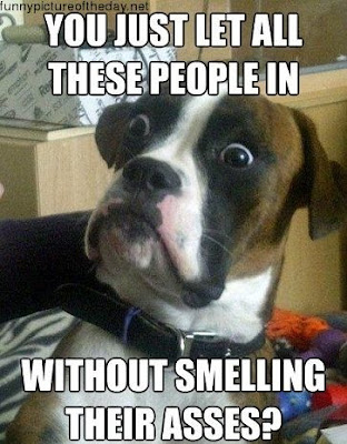 Dog Face Funny Smelling Ass