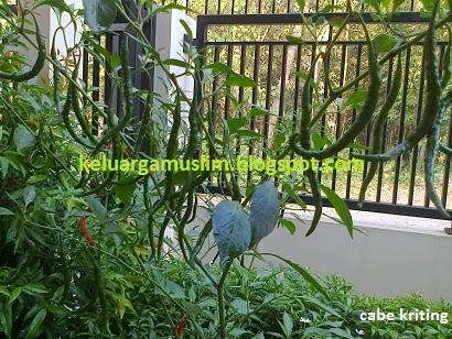 keluargamuslim.blogspot.com