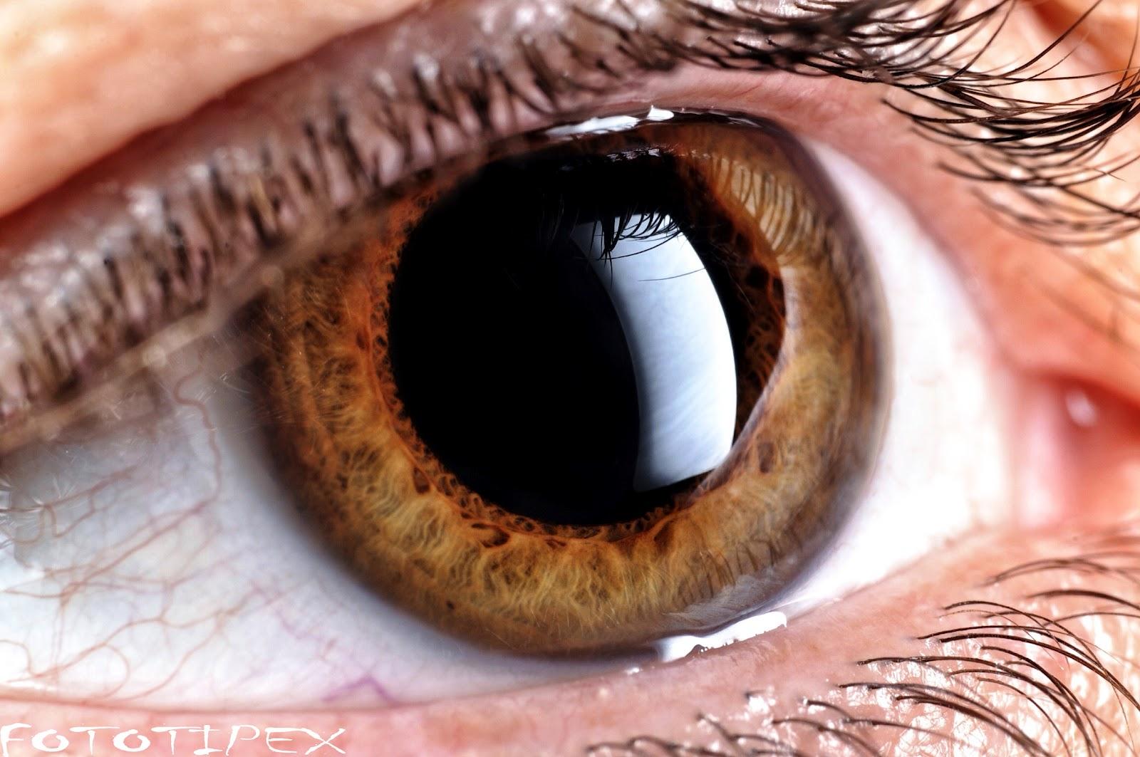 Cuántos MegaPixeles tiene el ojo humano? | El Centinela BCS