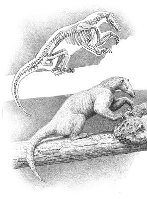 el pangolin o oso hormiguero europeo Eurotamandua