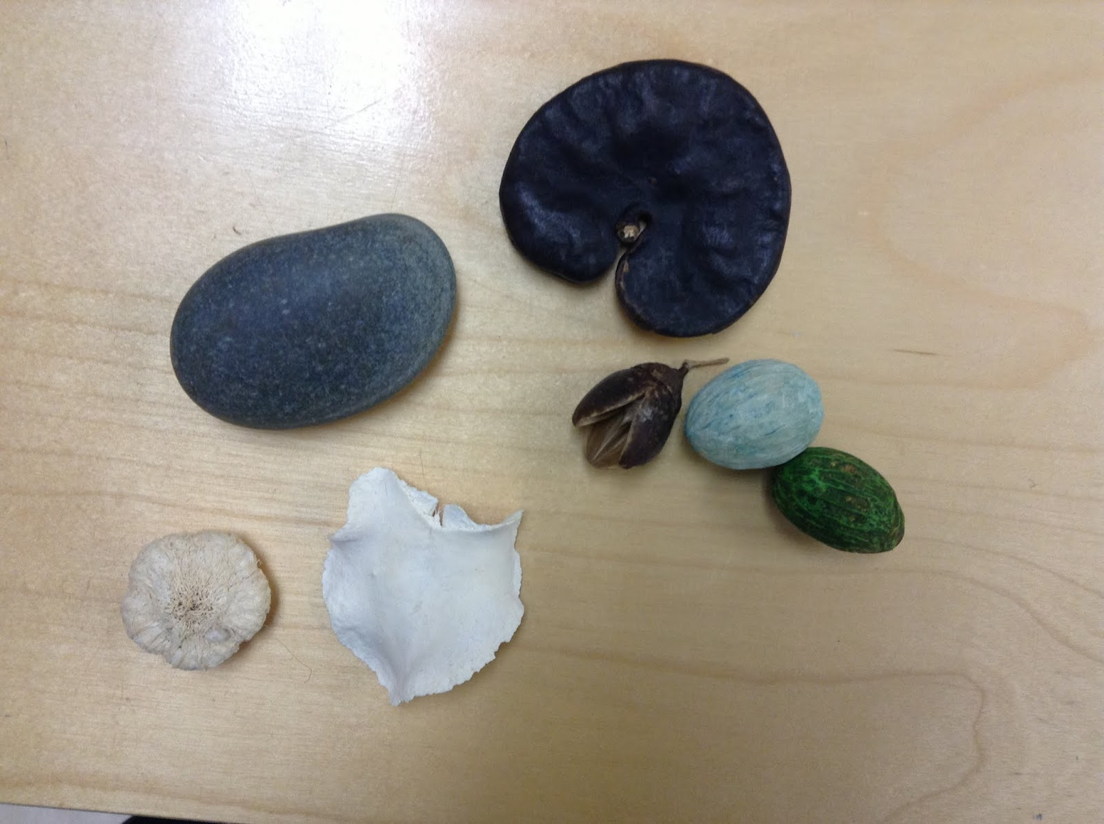 Seeds, dry flowers, rocks, seashell