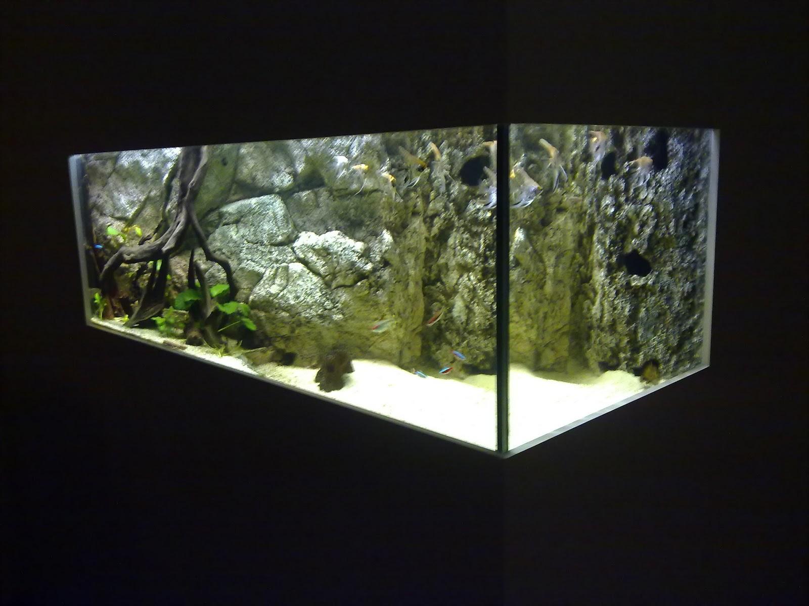 Wasserwelten aquarium - Aquarium in der wand ...