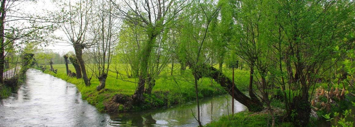 I segreti del vecchio bosco - le sorgenti del Bacchiglione - il Bosco tra Dueville e Novoledo