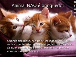 Animal NÃO é brinquedo!