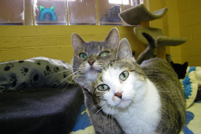 Wonderful cats at the Mosaic Feline Rescue (Ann Arbor, Michigan) by cseeman from flickr (CC-NC-SA)