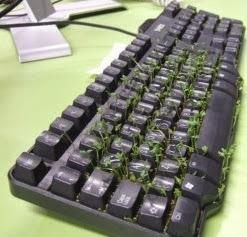 http://manualidadesreciclables.com/7869/como-hacer-una-maceta-con-teclado-reciclado