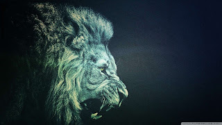 Lion images for pc wallpaper