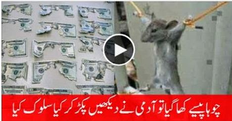 The Rat Eating the Money of his Owner then What Happened watch this Video, funny video, watch this funny video, rat cat eating money, owner,