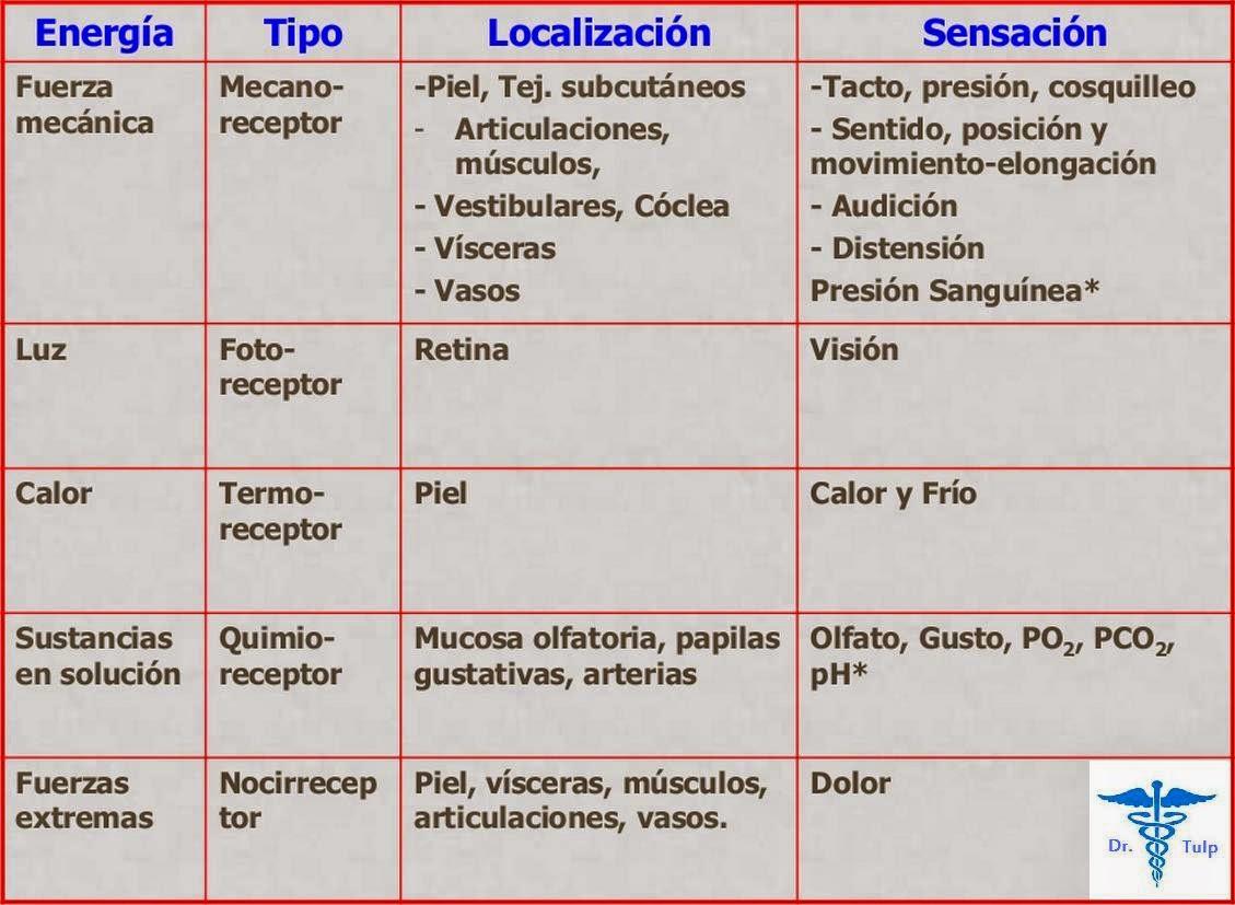 Tipos de receptores con su localización y funciones