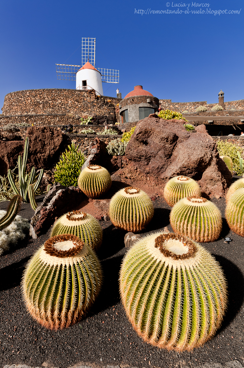 Remontando el vuelo jard n de cactus lanzarote for Jardin de cactus lanzarote