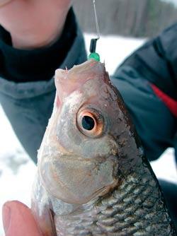 Рыбалка зимой на мормышку кошачий глаз