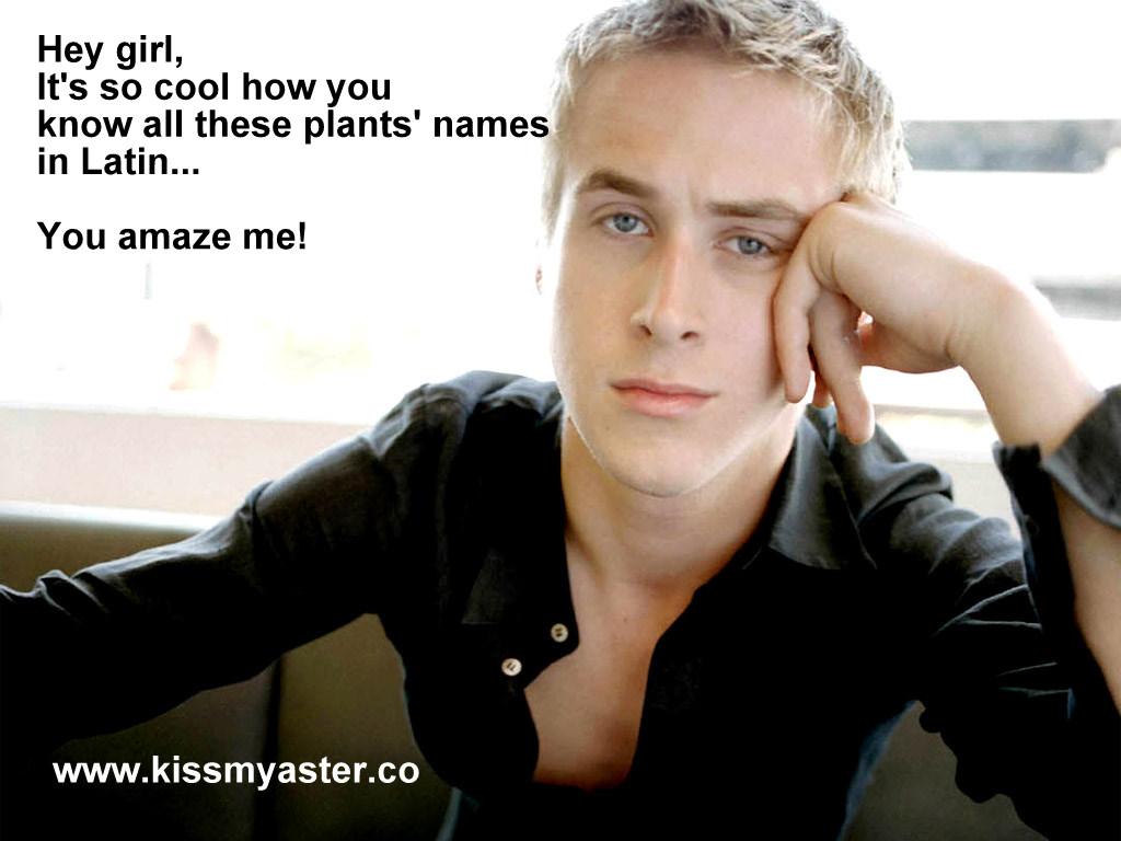 Ryan Gosling Hey Girl Hey Girl    The Garden Series