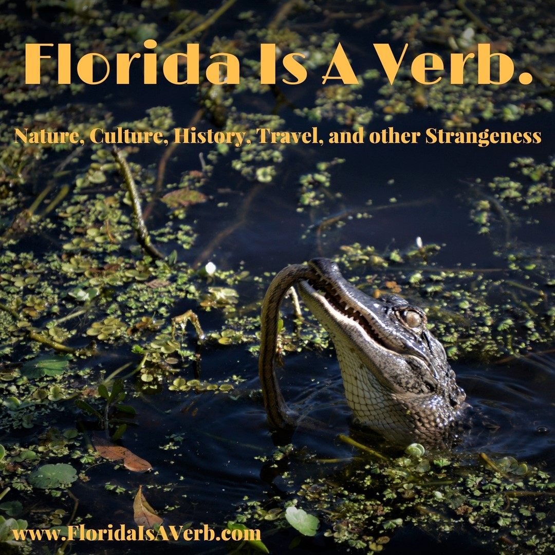 Florida Is A Verb