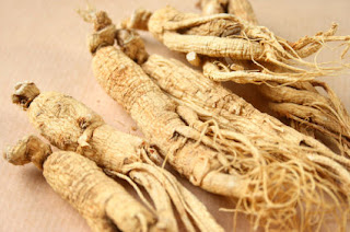 Panax ginseng can eat all the time.