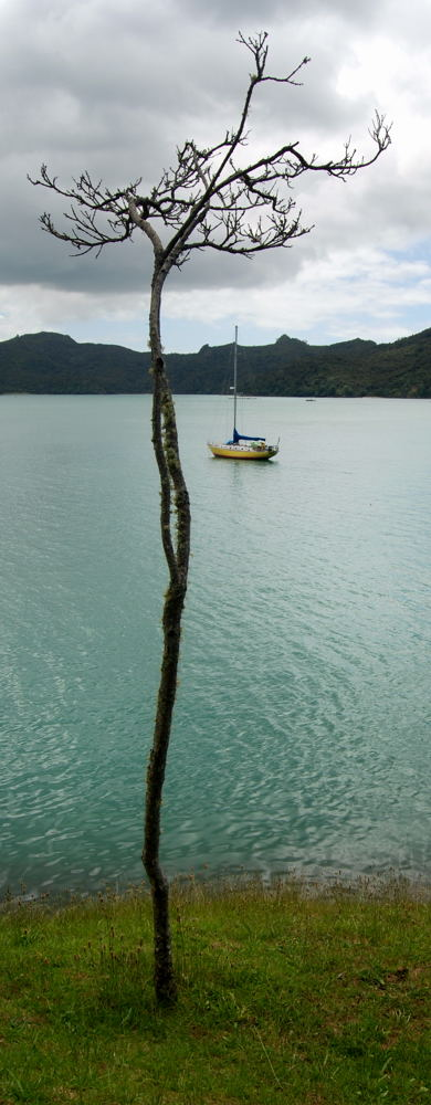 MOMO IN WHANGAROA, NEW ZEALAND