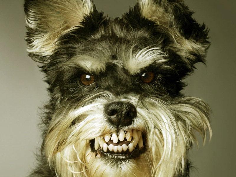funny dog wallpaperscomputer wallpaper free wallpaper