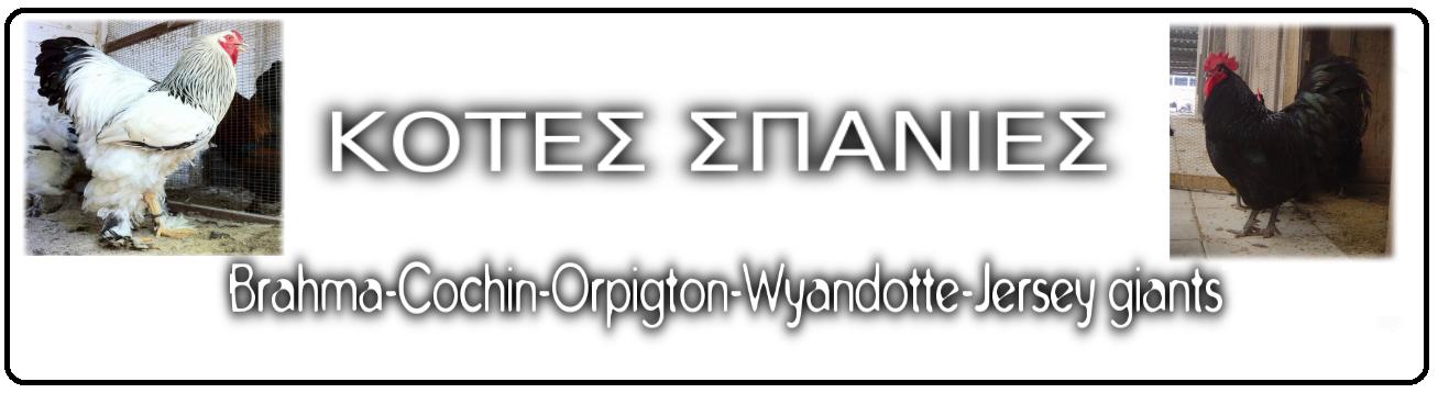 κοτες σπανιες,brahma-cochin-orpigton-wyandotte-jersey giants