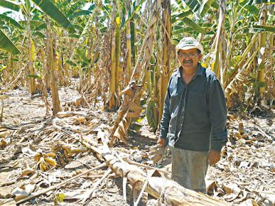 Varjota: Perímetro Irrigado Araras Norte vive seu pior momento pela seca.