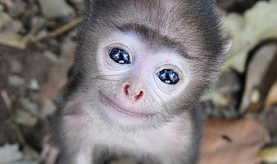 Inilah Hewan Terimut Di Dunia, Menggemaskan.. [ www.BlogApaAja.com ]