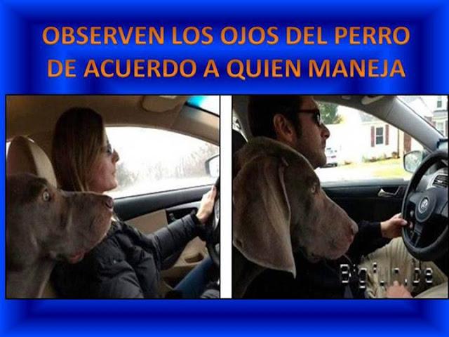 CHISTES MACHISTAS PERRO ASUSTADO