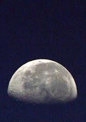 Lua na pinheira