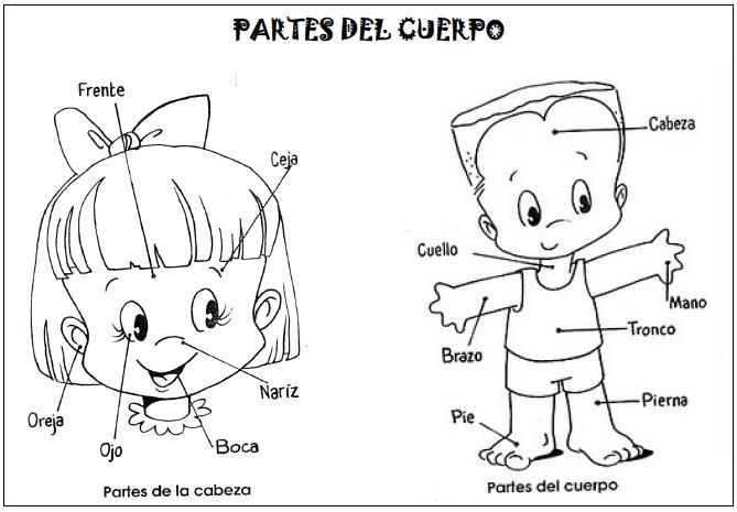 Imagenes de partes del cuerpo humano para niños - Imagui