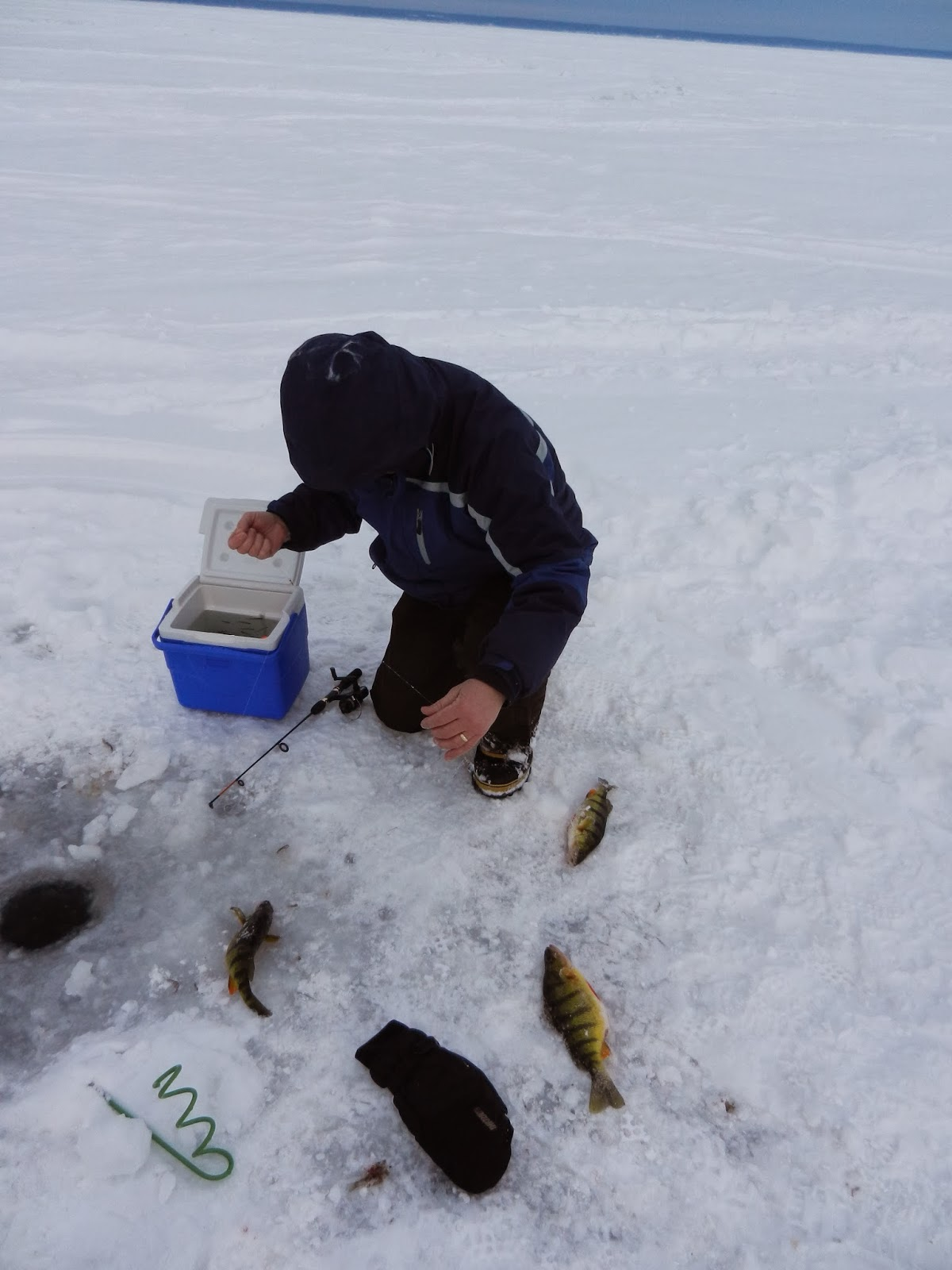 Fishing hunting in oswego county ny icing hawg perch for Ice fishing ny