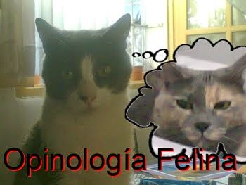 Opinología felina.