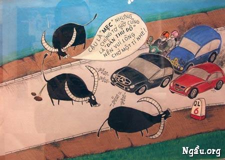 Biếm họa trâu bò thả rông ngoài đường phố