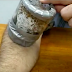 Sickening as a man feeds hundreds of bedbugs