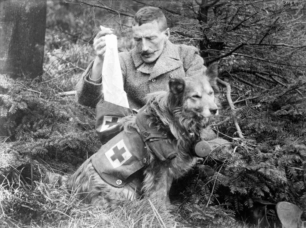 Black And White Pictures Of Animals In World War I