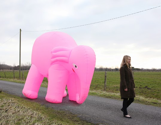 ©Jean-Baptiste Courtier - Elephant Rose - Fotografía | Photography