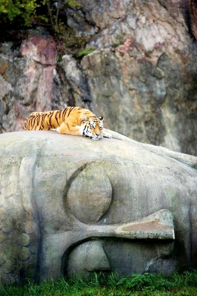 http://2.bp.blogspot.com/-ZqtfQ2NBYqU/Vg59mdzFTVI/AAAAAAAAGcM/xH1oV5ITb7k/s1600/tigre%2Bbuddha.jpg