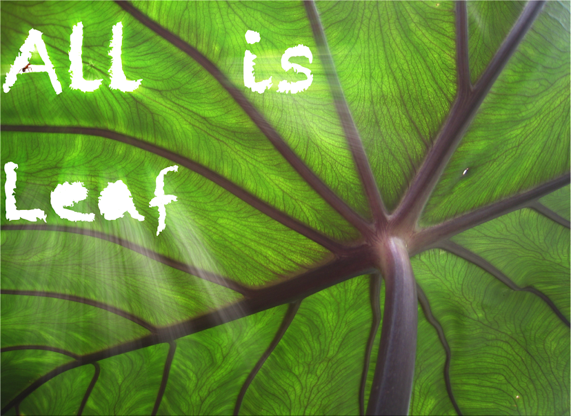 All is leaf
