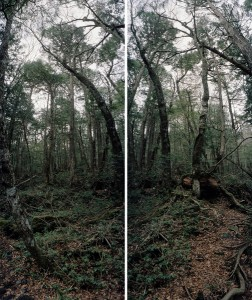 Aokigahara Forest People Places Suicide in Japan