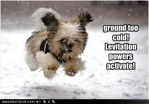 ... Hilarious Animals and Pets: Funny Dog and Cat Pictures With Captions