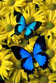 flores-amarillas-para-pintar