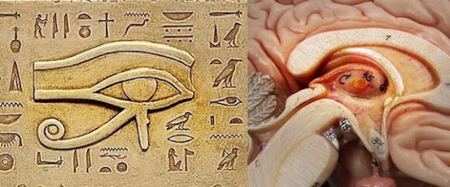 Pineal-Gland-why-was-that-kept-secret