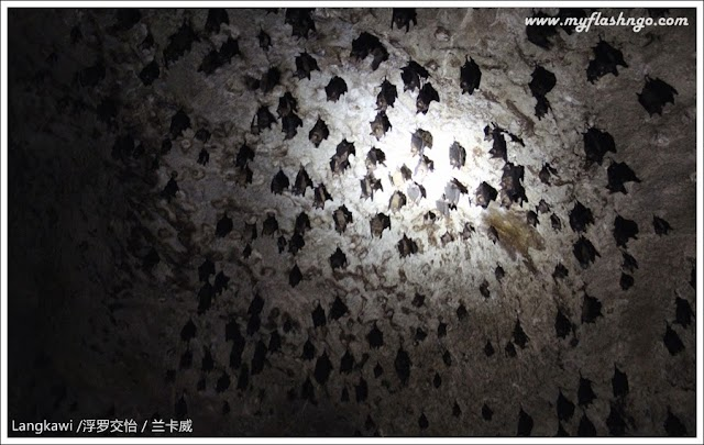 2014 旅游日记   Langkawi 浮罗交怡   红树林探险之蝙蝠洞 (2)