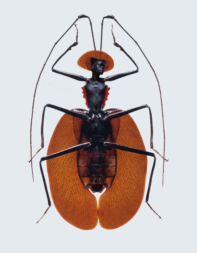 Laurent Seroussi. Insectes