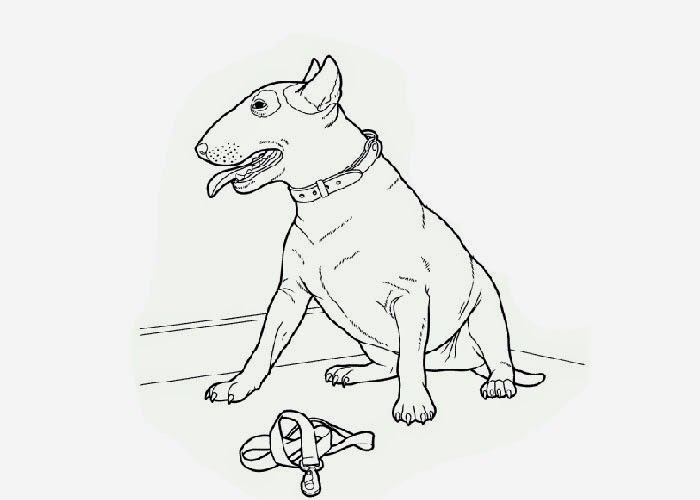 pit bulls coloring pages - photo#22
