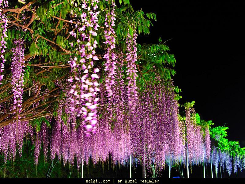 Her çiçek her renk yüreğimizin hatımıze farklı