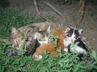 Four kittens Puzzle