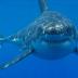 20 πράγματα πιο θανατηφόρα από τους καρχαρίες