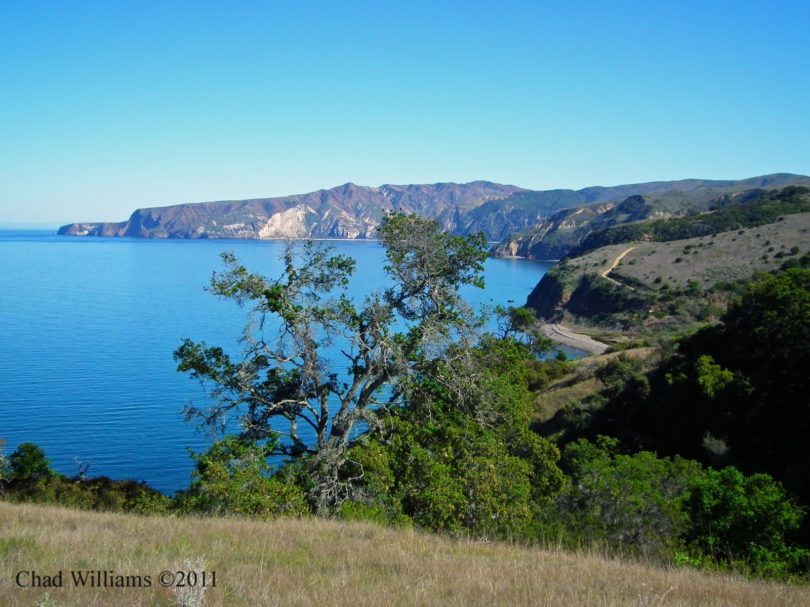 Santa Cruz Island. .. home of the Island Scrub Jay. Could you live ...