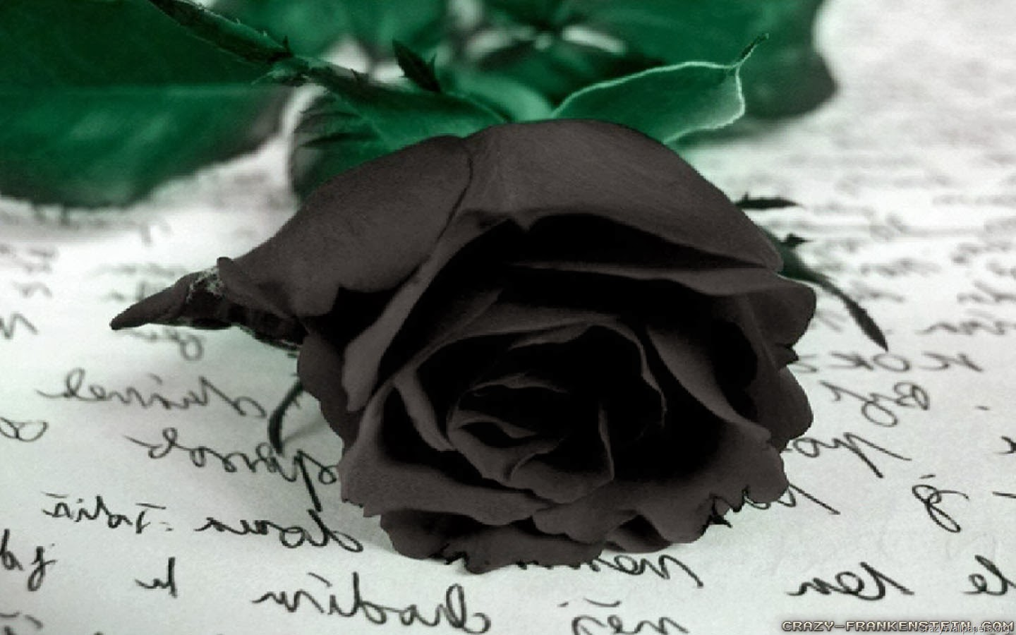 sad poetry, broken heart poetry, rose, ugly rose, dark rose, black rose