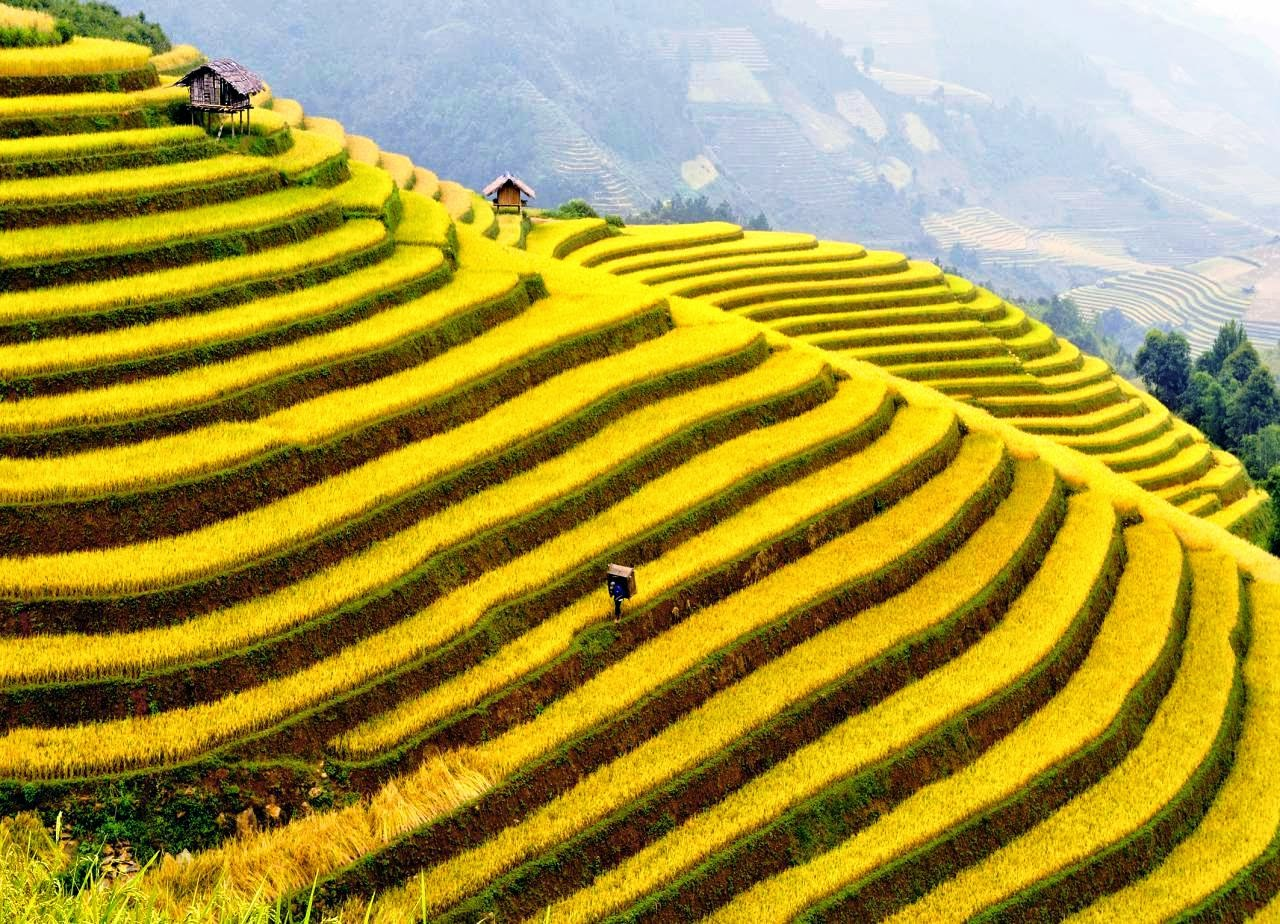 Sapa rice terraces, beautiful places in Vietnam through eyes of foreigners, new beautiful places to see in Vietnam