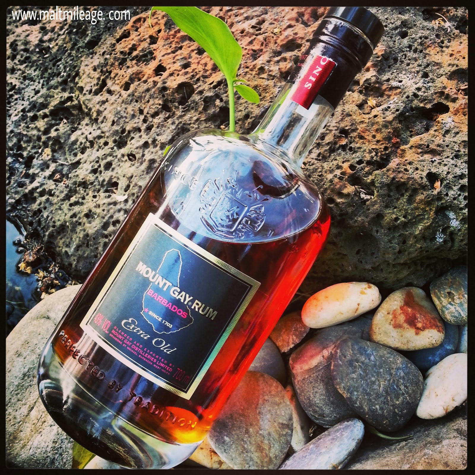 Best Barbados Rum Tour