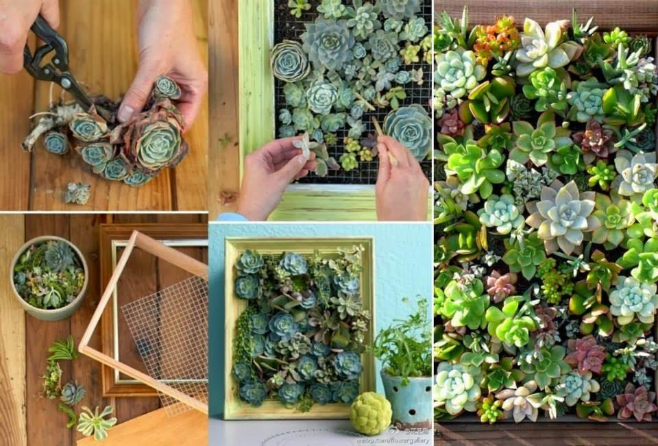 34 ideas con plantas para decorar tu hogar y jard taringa for Ideas para tu hogar